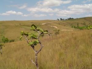 cerrado dá folhas que garantem sustentabilidade